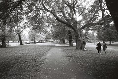 Path (goodfella2459) Tags: nikonf4 afnikkor24mmf28dlens ilfordpanfplus50 35mm blackandwhite film analog london path garden park kensingtongardens trees grass bwfp