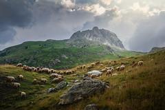 Finding my ways... (Giacomo della Sera) Tags: mountain montaña camino path sheep ovejas pastor rocks rocas photo photography light luz clouds pics pico
