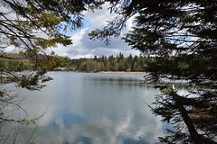 Bounding with nature (Lorraine Goh) Tags: canada quebec laurentides domaine lausanne lake lac river forest pine tree spring green landscape countryside north montreal montain fresh air camping