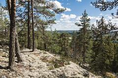 Oxberget. (Jag är David Nyman) Tags: sverige sweden scandinavia landskap landscape djurmo dalarna klack oxberget gagnef skog berg швеция скандинавия горы гора лес природа север north forest woods hills