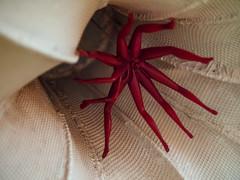 Spider in the flower (Iliana) (cizauskas) Tags: spider sculpture art publicart decatur georgia canon canonfd legacylens manualfocus fotodiox