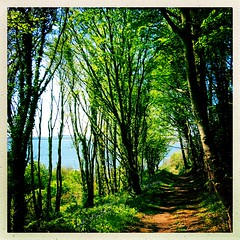 The way through the woods (Julie (thanks for 9 million views)) Tags: hipstamaticapp htmt trees woods track path woodland sea coast wexford ireland irish squareformat iphonese green 100xthe2019edition 100x2019 image64100 arthurstown shadows