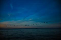L1008193.jpg (Dan Chippendale) Tags: m10 leicam10 leica isleofwight holiday seaside leicadigital leicaphoto leicaphotography