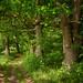Waldweg - forest path