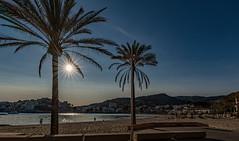 Mallorca Peguara Strand 6529 (Peter Goll thx for +12.000.000 views) Tags: mallorca spain spanien urlaub travel strand beach sun sonne sky himmel peguera majorca palme