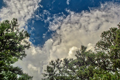 Clouds and Pitch Pines, 2019.05.31 (Aaron Glenn Campbell) Tags: knoxcounty knoxville tennessee outdoors optoutside nature pinusrigida pitchpines trees sky clouds 3xp hdr ±3ev nikcollection colorefexpro viveza sony a6000 ilce6000 mirrorless fotodiox lensadapter tokina 35105mmf35 telephoto zoom vintagelens filmera