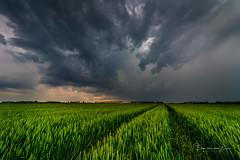 Bad Weather (Ellen van den Doel) Tags: goeree nature nederland natuur netherlands storm outdoor cloud graan overflakkee sky thunderstorm thunder 2019 juni field sommelsdijk zuidholland