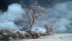 Medieval site, Exmoor (david.hogan7) Tags: landscape fine art colour infrared canon 750d converted ir 720 moody atmospheric storm clouds tree stunted weather beaten wall earth work medieval boundry moors hills exmoor national park lorna doone badgworthy
