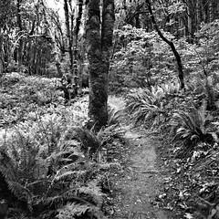 Mount Talbert Nature Park Loop Trail No. 3 (cobbu2) Tags: bronica bronicas 50mmf28nikkoroc 50mmnikkoro delta3200 ilforddelta3200