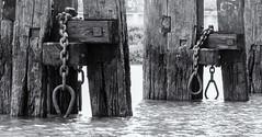 Playful : Bondage (michael_hamburg69) Tags: hamburg germany deutschland hafen harbour harbor unterwegsmitchristian phototourmit3daybeard3tagebart duckdalben kette ankerplatz holz wood wooden dalbe monochrome rugenbergerhafen