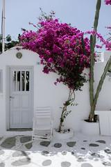 Mykonos style (marin.tomic) Tags: mykonos greece greek island city travel europe cyclades kykladen aegean mediterranean style traveler fujifilm xt2 flower summer holiday vacation