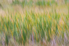 Meadow Grass (Chris Skopec) Tags: california places sierranevada sierranevadamountains usa yosemitenp yosemitenationalpark yosemitevalley landscapephotography landscapes mountains scenic travel