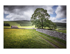June Barns (gerainte1) Tags: littondale yorkshiredales yorkshire buttercups flowers barn summer colour