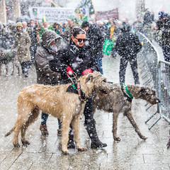 St Patrick's Day Parade (EightBitTony) Tags: 2018 canon6d crowd stpatrick marching city parade nottingham snow canid urban march animal mammal dogs dog people irish citycentre uk nottinghamshire canon canondslr canoneos canoneos6d england unitedkingdom
