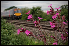 TRACKSIDE CAMPION (OLD GIT WITH A CAMERA) Tags: