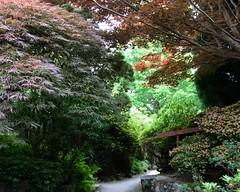 The Beauty of the Tree (amanda.parker377) Tags: leonardsleelakesandgardens rockgarden placesofinterest varieties horticulture gardens trees leaves
