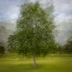 Tree (Marion McM) Tags: dundee scotland unitedkingdom tree blur motion intheround blending opacity abstract 2019