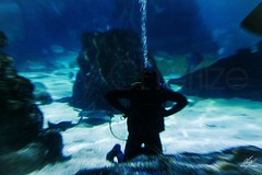 In moving (Amy Charlize) Tags: amycharlize focosocial moving underwater water blue