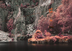 Hang in there (joshdgeorge7) Tags: red lake water wales pond rust mining mines infra mountain leaves yellow gold pentax cymru rusty diving foliage climbing slate llanberis ks2 aged aerochrome
