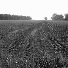 300519-017 (salparadise666) Tags: rolleiflex sl66 planar 80mm fomapan 100 boxspeed caffenol rs 6x6 square medium format analogue film camera rural monochrome bw black white hannover region niedersachsen germany