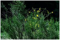 In the forest - Im Wald (b_kohnert) Tags: wood wald trees pflanzen nature natur light licht landschaft landscape kreisgrosgerau hessen grün green germany forest farben colors blüten blätter bäume baum