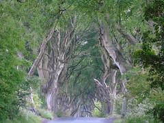The Dark Hedges (Jadeebo) Tags: ireland northernireland darkhedges gameofthrones got trees hedges nature tourist