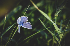 Butterfly .. (Julie Greg) Tags: butterfly grass park details colours canon nature nautre drops
