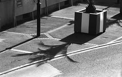 Palmier (christophe.vinchon) Tags: palmier ombre