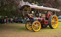 L2019_1241 - Burrell Showman's Road Locomotive 3890 MAJESTIC (www.jhluxton.com - John H. Luxton Photography) Tags: leica wales unitedkingdom cymru gwent abergavenny monmouthshire 2019 yfenni leicam leicamtyp262 leicam262 johnhluxtonphotography wwwjhluxtoncom abergavennysteamveteranandvintagerally abergavennysteamveteranandvintagerally2019 road park traction engine bailey locomotive baileypark steamtractionengine tractionenginerally showmens transportrally burrell burrellshowmanslocomotive herbertsgallopinghorsesontour majestic