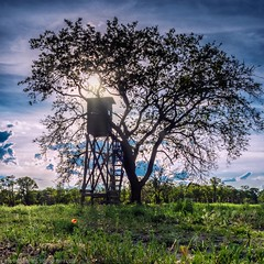Lonesome tree on a meadow (Steppenwolf33) Tags: tree meadow chair sun sky berlin steppenwolf33