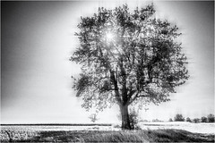 Tree in a Grid... (Ody on the mount) Tags: grid abstrakt anlässe bäume em5ii felder filmkorn fototour himmel landschaft mzuiko918 omd olympus pflanzen rahmen sonne abstract bw blackandwhite frame grain landscape monochrome sw schwarzweis sun tree