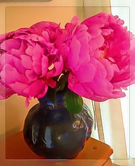 Beautiful birthday blossoms! (Marcia Portess-Thanks for a million+ views.) Tags: pink flowers flores fleur petals blossom map peonies hotpink rosamexicana darkpink marciaportess marciaaportess beautifulbirthdayblossoms paintedpetals