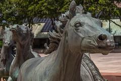 The Mustangs of Las Colinas (gvbtom) Tags: themustangsoflascolinas irving texas