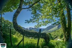 Terre de Lees-Athas (https://pays-basque.coline-buch.fr/) Tags: 2019 64 aquitaine aspe béarn colinebuch france leesathas valléedaspe montagne nature paysage pyrénées pyrénéesatlantiques vallée