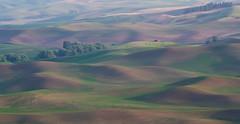 Red Barn Hazy Dusk (fotostevia) Tags: palouse palousehills steptoe steptoebutte agriculture fields patterns wheat wheatfields pastels painterly pentaxart