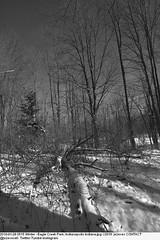 2010-01-28 0515 Winter - Eagle Creek Park, Indianapolis Indiana (Badger 23 / jezevec) Tags: joulukuu tammikuu helmikuu jäädytetyt puut luminen lumisade maisema luonto matkailu amerikassa indianapolis indiana chill ympäristö jää jäinen vetur desember janúar febrúar fryst tré snjókoma landslag náttúru ferðalög ameríka umhverfi ís eaglecreek 2010