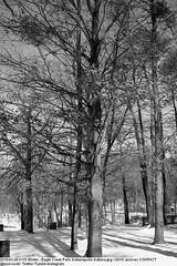 2010-01-28 0115 Winter - Eagle Creek Park, Indianapolis Indiana (Badger 23 / jezevec) Tags: joulukuu tammikuu helmikuu jäädytetyt puut luminen lumisade maisema luonto matkailu amerikassa indianapolis indiana chill ympäristö jää jäinen vetur desember janúar febrúar fryst tré snjókoma landslag náttúru ferðalög ameríka umhverfi ís eaglecreek 2010
