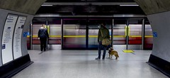Does This Go To Barking? (Douguerreotype) Tags: england london sign uk animal underground dog urban british train city tunnel britain subway metro gb tube station