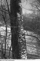 2010-01-28 0005 Winter - Eagle Creek Park, Indianapolis Indiana (Badger 23 / jezevec) Tags: joulukuu tammikuu helmikuu jäädytetyt puut luminen lumisade maisema luonto matkailu amerikassa indianapolis indiana chill ympäristö jää jäinen vetur desember janúar febrúar fryst tré snjókoma landslag náttúru ferðalög ameríka umhverfi ís eaglecreek 2010
