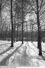 2010-01-28 0091 Winter - Eagle Creek Park, Indianapolis Indiana (Badger 23 / jezevec) Tags: joulukuu tammikuu helmikuu jäädytetyt puut luminen lumisade maisema luonto matkailu amerikassa indianapolis indiana chill ympäristö jää jäinen vetur desember janúar febrúar fryst tré snjókoma landslag náttúru ferðalög ameríka umhverfi ís eaglecreek 2010