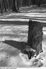 2010-01-28 0112 Winter - Eagle Creek Park, Indianapolis Indiana (Badger 23 / jezevec) Tags: joulukuu tammikuu helmikuu jäädytetyt puut luminen lumisade maisema luonto matkailu amerikassa indianapolis indiana chill ympäristö jää jäinen vetur desember janúar febrúar fryst tré snjókoma landslag náttúru ferðalög ameríka umhverfi ís eaglecreek 2010