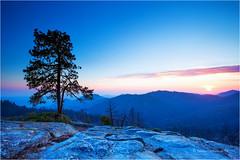 Blue Hour (Sandra Lipproß) Tags: national park nationalpark sequoia kingscanyon california outdoor outside sunset bluehour tree mountains forest nature travel beltofvenus landscape beetlerock sierranevada highsierra panoramicview usa united states westcoast