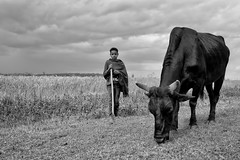 Children Of The Moon (u c c r o w) Tags: rain blackandwhite cattle cow child people sudan africa portrait ngc siyahbeyaz uccrow landscape sudanese children herdsman bull black field clouds