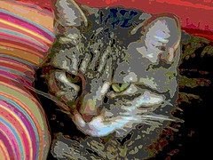 IMG_8447 (molaire2) Tags: chat felin felicette eric 2019 sara
