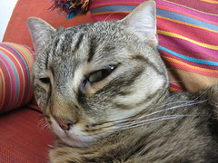 IMG_8441 (molaire2) Tags: chat felin felicette eric 2019 sara