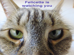 IMG_8655 (molaire2) Tags: chat felin felicette eric 2019 sara