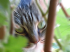 IMG_8448a (molaire2) Tags: chat felin felicette eric 2019 sara