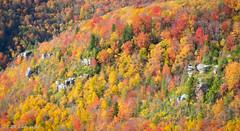 Blanket of Fall Colors (KRHphotos) Tags: westvirginia fallcolors landscape mountain blackwaterfallsstatepark nature