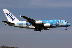All Nippon Airways | Airbus A380-800 | JA381A | Flying Honu livery | Tokyo Narita (Dennis HKG) Tags: aircraft airplane airport plane planespotting staralliance canon 7d 24105 tokyo narita rjaa nrt allnipponairways allnippon ana nh japan airbus a380 a380800 airbusa380 airbusa380800 ja381a
