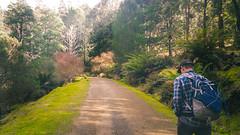 Start of Myrtle Forest Track, Collins Bonnet